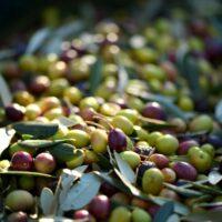 olives-253264